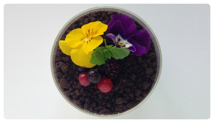pannacotta honey oreo edible flower recipe