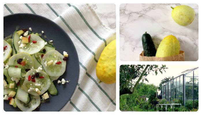 Recipe lemon cucumber salad Bijenakker Odijk